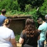 vor (Solitär)Bienenwand