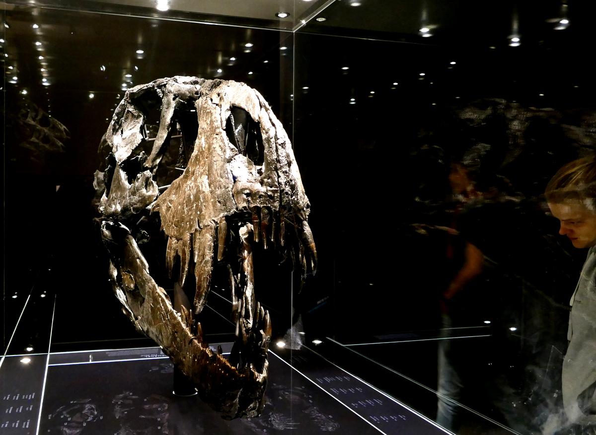 Allein mit dem Tyranosaurus rex