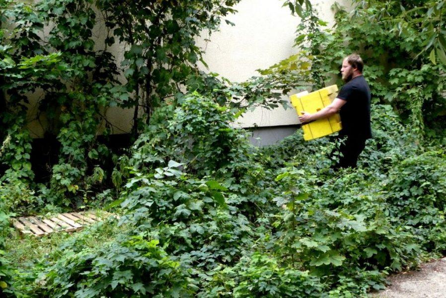 Schulbienen 2019 an der Peter A. Silbermann Schule - Die Bienen kommen