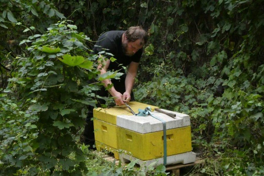 Schulbienen 2019 an der Peter A. Silbermann Schule - Die Kisten werden hoffentlich noch schöner…
